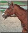 Dakota the Quarter Horse