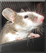 Glenn the Fancy Mouse