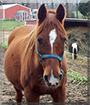 Missy the Arabian Horse