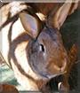 Schlappi the Rabbit