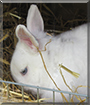 Mucki the Rabbit