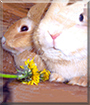 Fivi and Hoppel the Rabbits