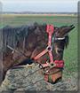 Sina the Pony