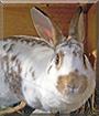 Missy the Rabbit