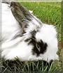 Ozzie the Rabbit