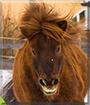 Max the Pony