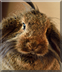 Bobina the Wild Fleece Rabbit
