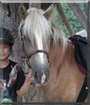 Jolina the Haflinger Horse