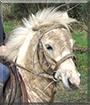 Master Pipps the Shetland Pony mix