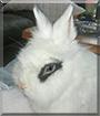 MnM the Lionhead, Dwarf Rabbit mix