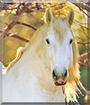 Dragnal the Percheron Horse