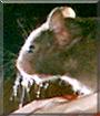 Herbie the Hamster,