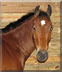 Reeses the Bay mix Horse