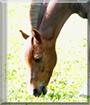 Polly the Pony