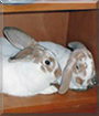 Bun Bun, Sugar the Rabbits