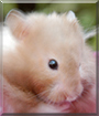 Squirt the Hamster