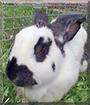 Felix the Rabbit