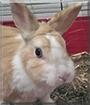 Pauli the Rabbit