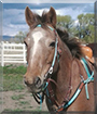 Ditto the Appaloosa Horse