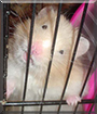 Aidan the Hamster