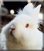Nala the Lion head Rabbit