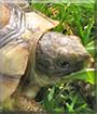 Momo the Tortoise