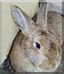 Matze the Rabbit