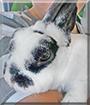 Sternchen the Rabbit