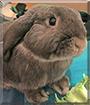 Toffee the Dwarf Lop Rabbit