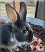 Fusion the Rabbit