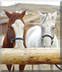 Misty and Dollar the Quarter Horses