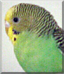 A.J. the Parakeet