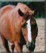 Rita the Thoroughbred Horse