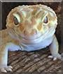 Thomas Gordon the Leopard Gecko