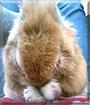 Hasi the Rabbit