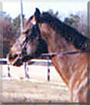 Abby the Quarter Horse