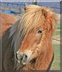 Charlie the Pony mix