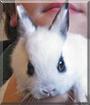 Snoopy the Dwarf Rabbit