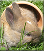 Keks the Rabbit