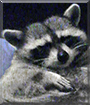 Sabastian the Raccoon