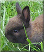 Schnugi the Rabbit