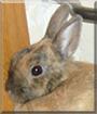Flecki the Rabbit