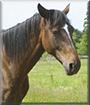 Savana the Horse