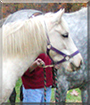 Jubilee the Connemara Pony, the Pet of the Day