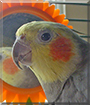 Sparky the Cockatiel