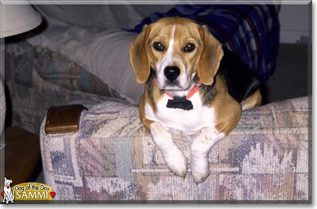 Name:  dog.jpg Views: 38 Size:  88.8 KB