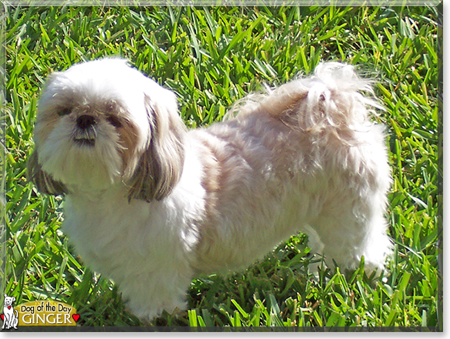 Name:  dog.jpg Views: 19 Size:  402.1 KB