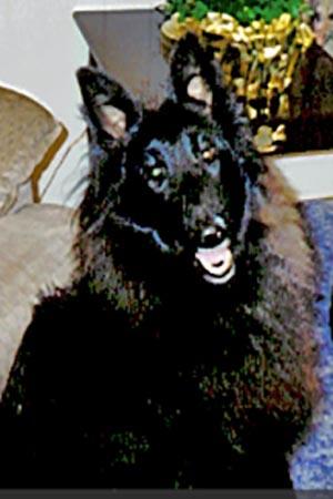 Name:  dog.jpg Views: 110 Size:  24.6 KB