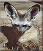 Name:  fox.jpg Views: 31 Size:  12.3 KB