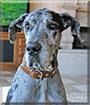 Name:  dog.jpg Views: 17 Size:  14.5 KB